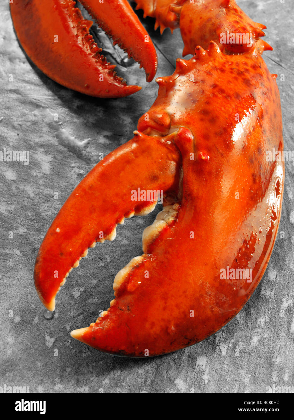 close up of a lobster claw - Stock Image
