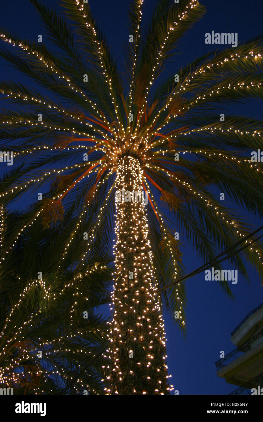 Christmas lights on a palm tree at the promenade in Nice France - Stock Image