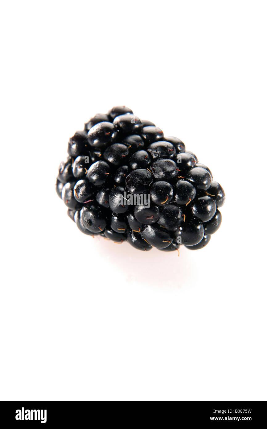 Einzelne Brombeere, blackberry - Stock Image