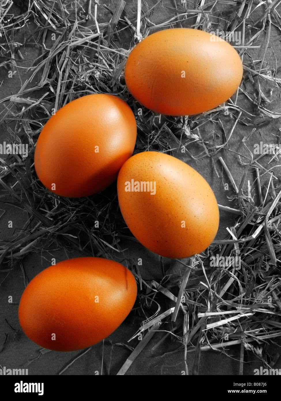 Burford brown organic eggs - Stock Image