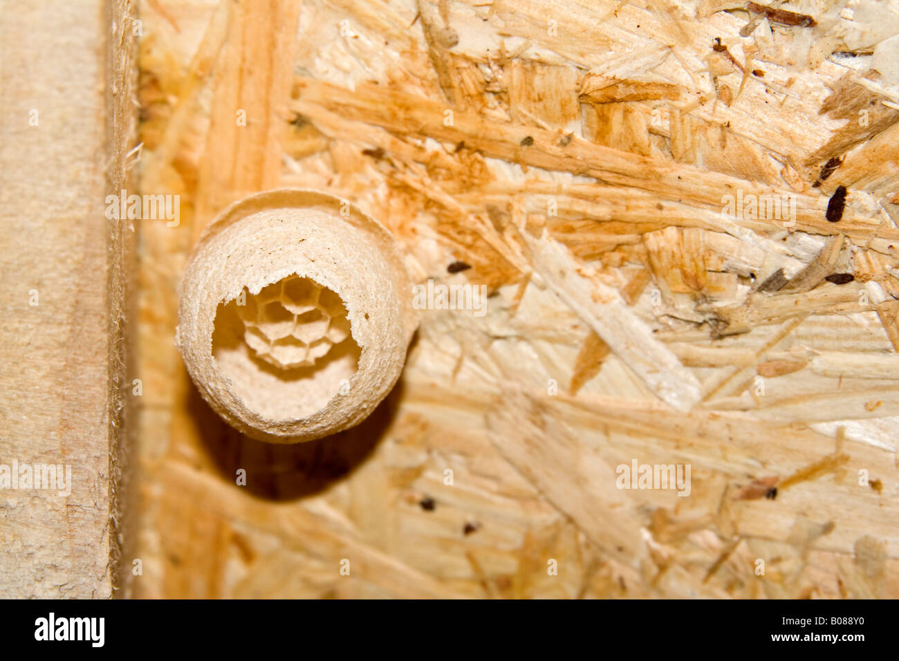 A Small Wasp S Nest In A Shed Uk Stock Photo 17393012 Alamy
