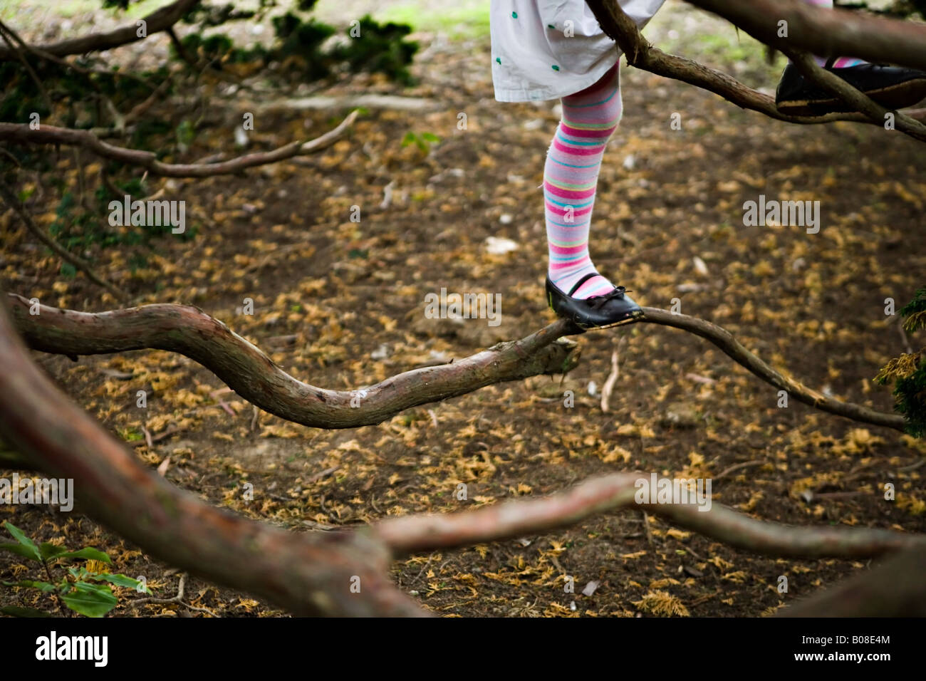 Children at play climbing a large coniferous tree Girl aged four years boy aged six - Stock Image