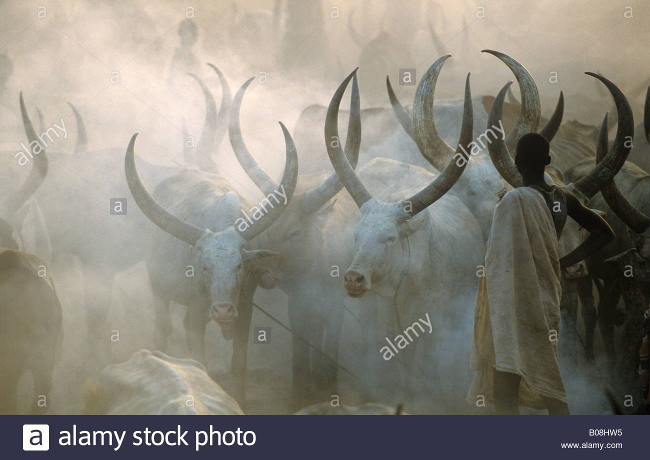 Dinka Cattle Camp Southern Sudan - Stock Image
