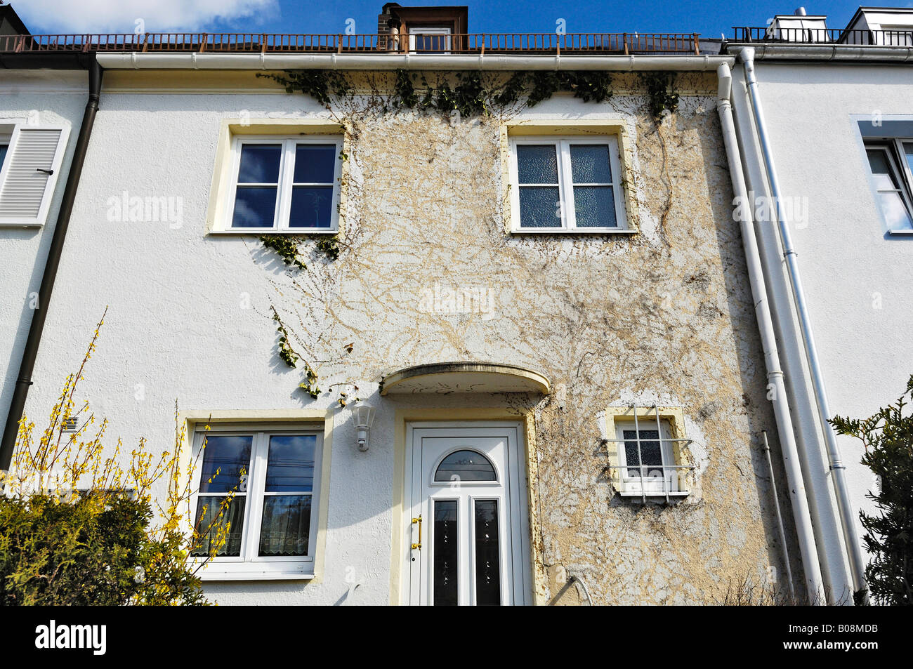 Building facade showing marks left by almost completely removed ivy (Hedera), Munich, Bavaria, Germany - Stock Image