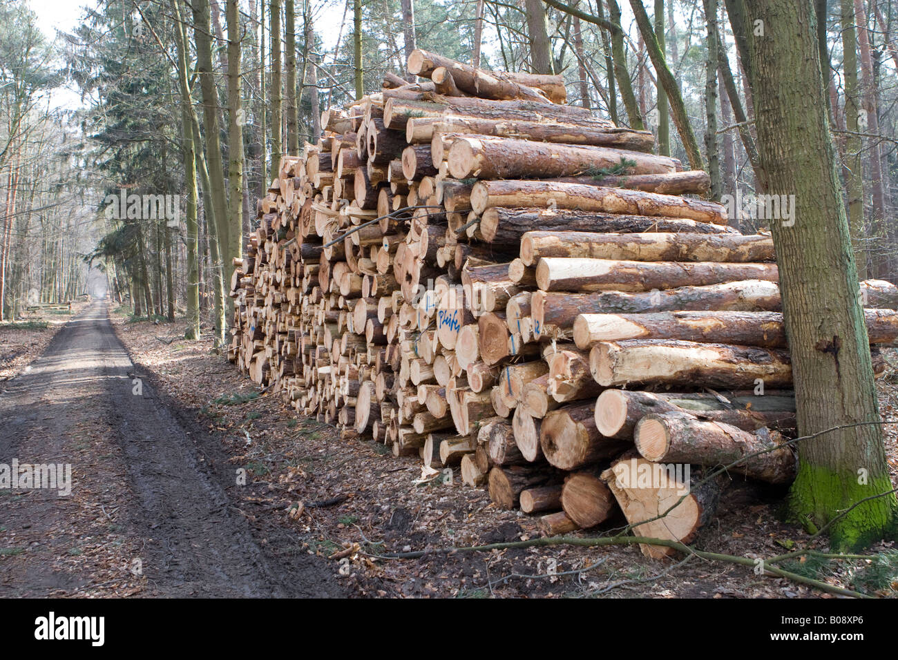 Large pile of logs, tree trunks cut into lengths after storm damage, Hesse, Germany - Stock Image