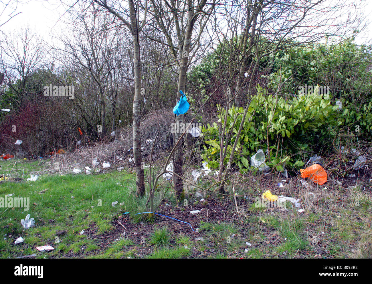 Wind-blown plastic bags trapped in trees,next Supermarket, Glasgow, Scotland,UK. Stock Photo