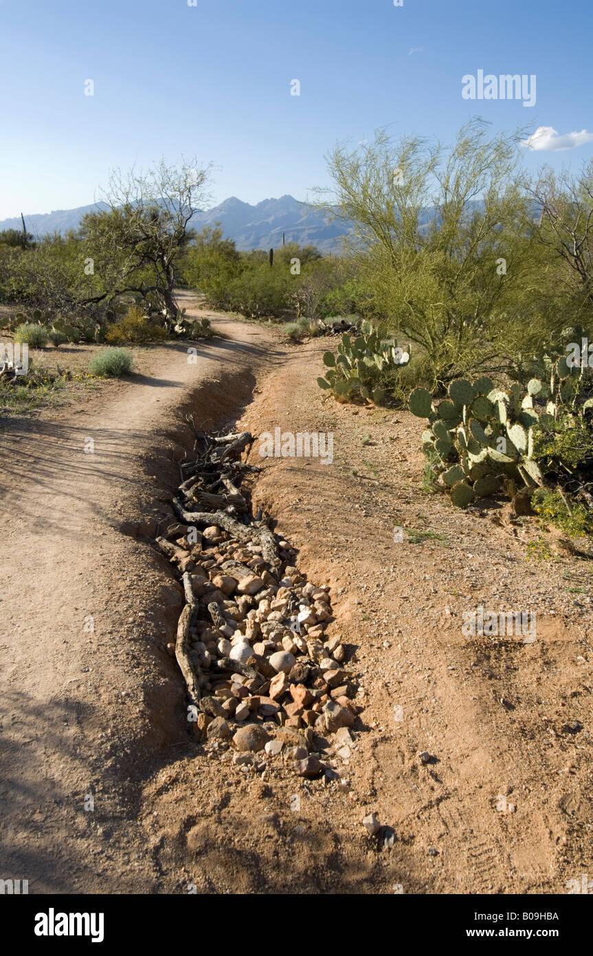 Gully Erosion in Saguaro National Park Tucson Arizona USA - Stock Image