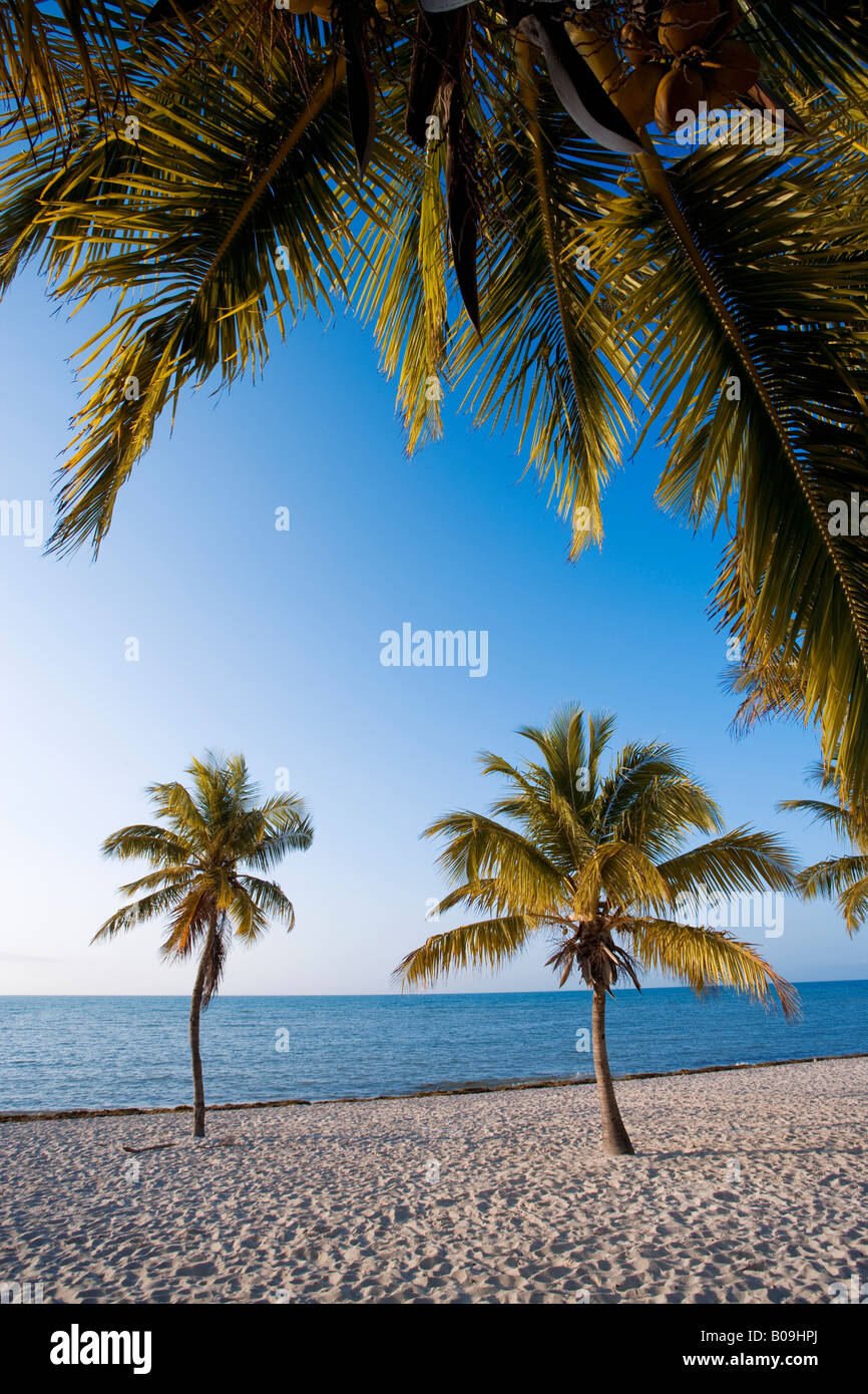 Tropical beach and palm trees in Key West, Florida, USA - Stock Image