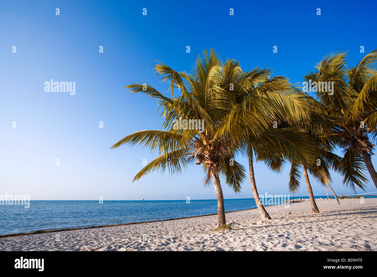 Tropical beach with palm trees in Key West, Florida, USA Stock Photo
