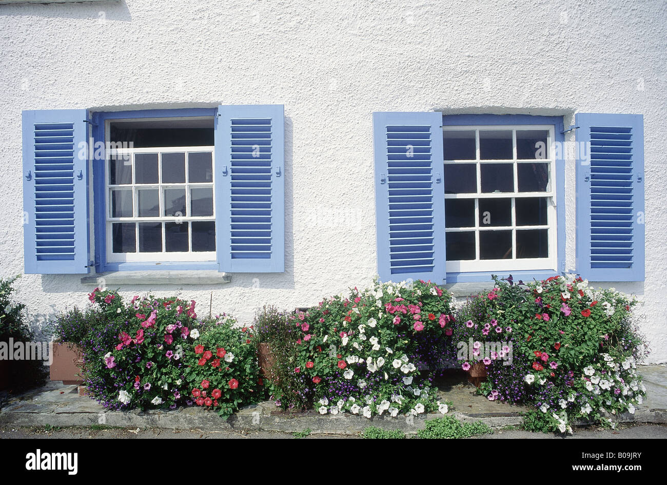 White house with blue shuttered windows Plants growing in tubs and ...