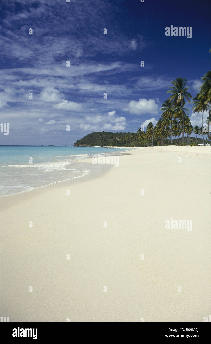 White sand beach Sea with fringe of palm trees Headland in distance DARKWOOD BEACH ANTIGUA Stock Photo