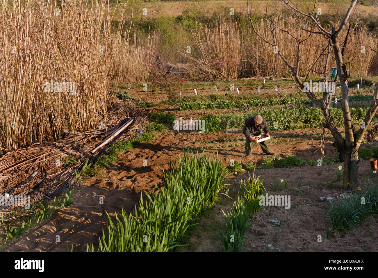 Man planting his onions on a French small holding in the Languedoc Roussillon region of France - Stock Image