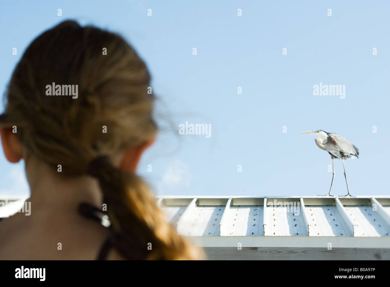 Little girl watching heron, over the shoulder view, focus on background - Stock Image