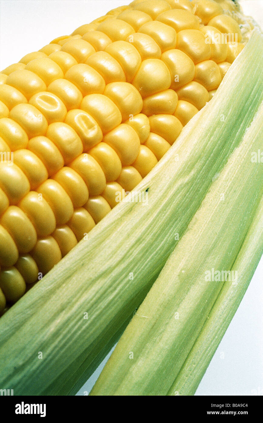 Corn cob, close-up - Stock Image