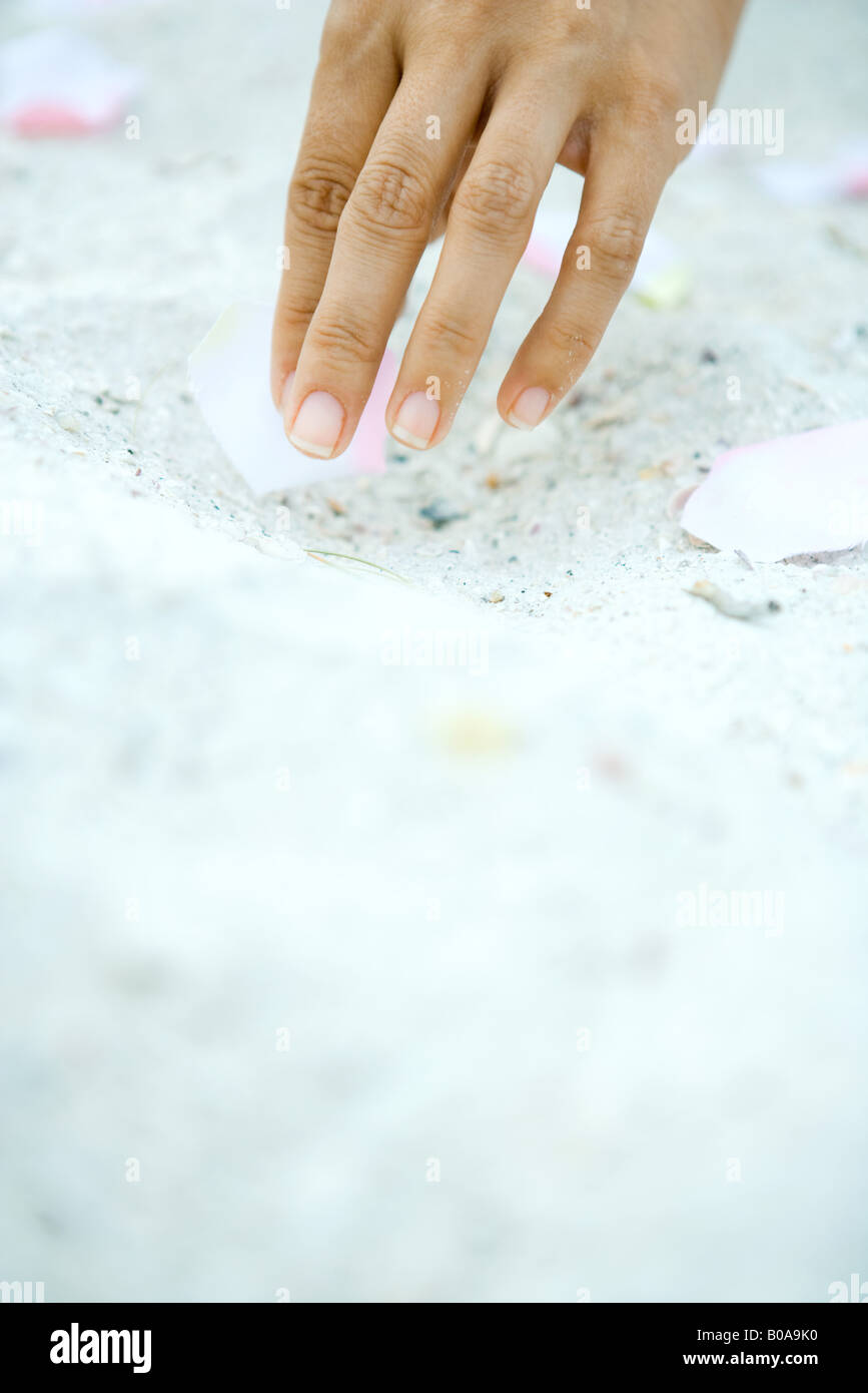 Hand picking up flower petal on sand, surface level view - Stock Image