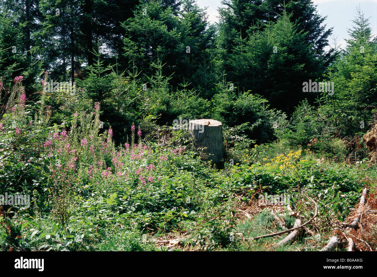 Tree stump in flowery meadow Stock Photo
