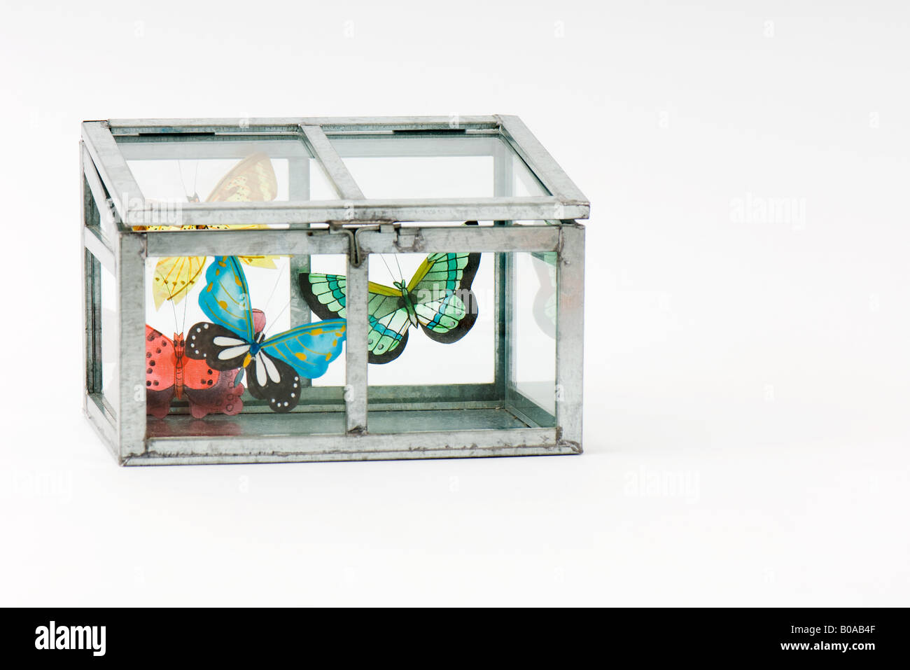 Fake butterflies inside closed glass box - Stock Image