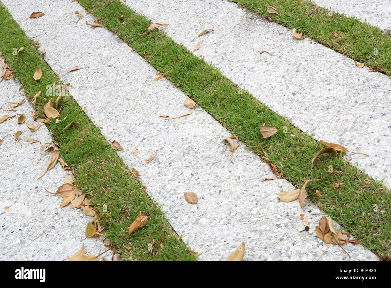 Paving stones and grass, close-up - Stock Image