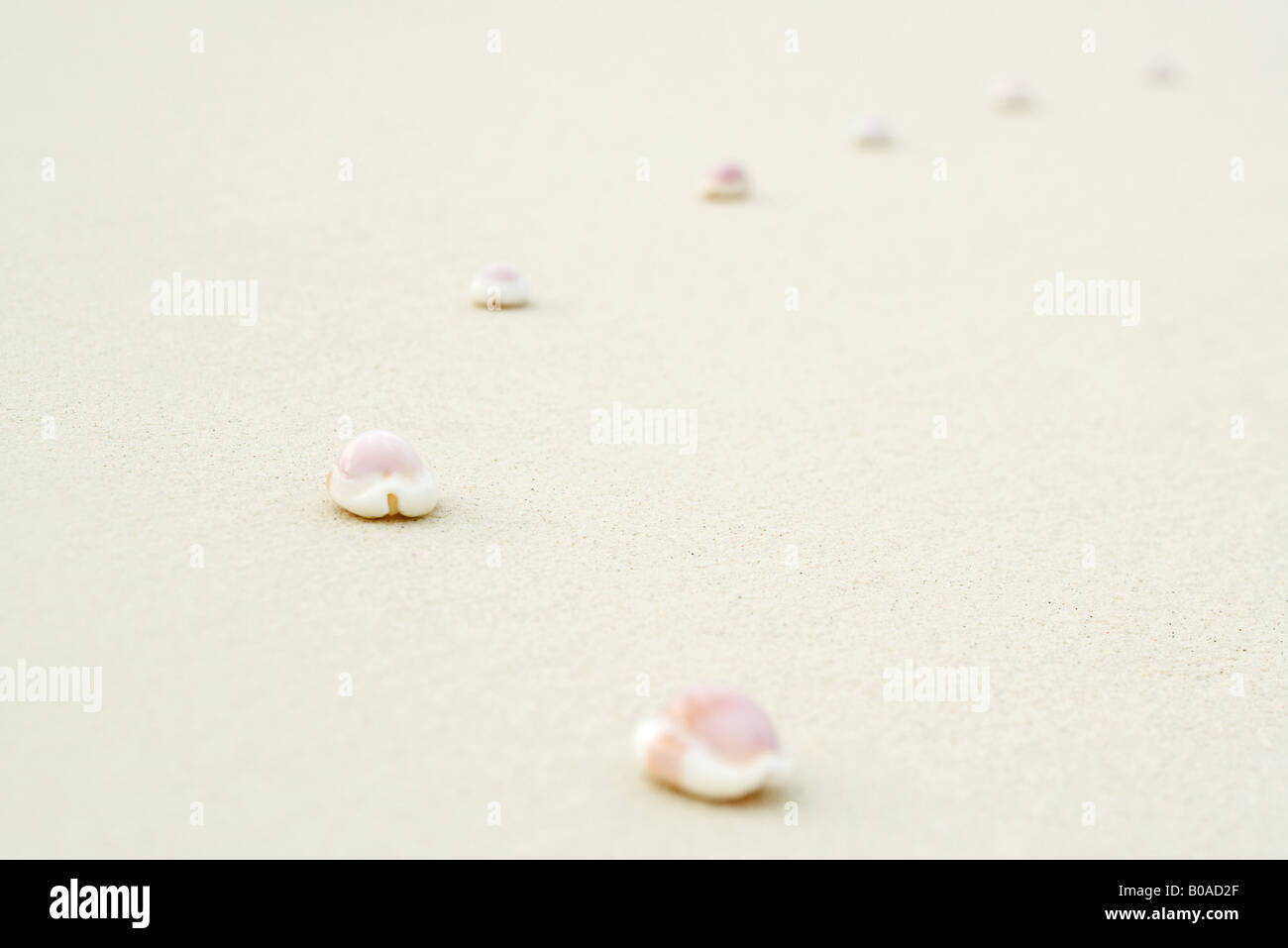 Seashells lined up on sand, close-up - Stock Image