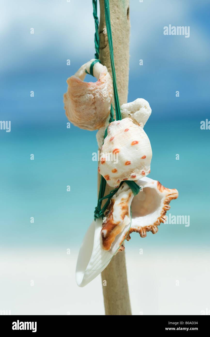 Seashells tied to stick, close-up - Stock Image