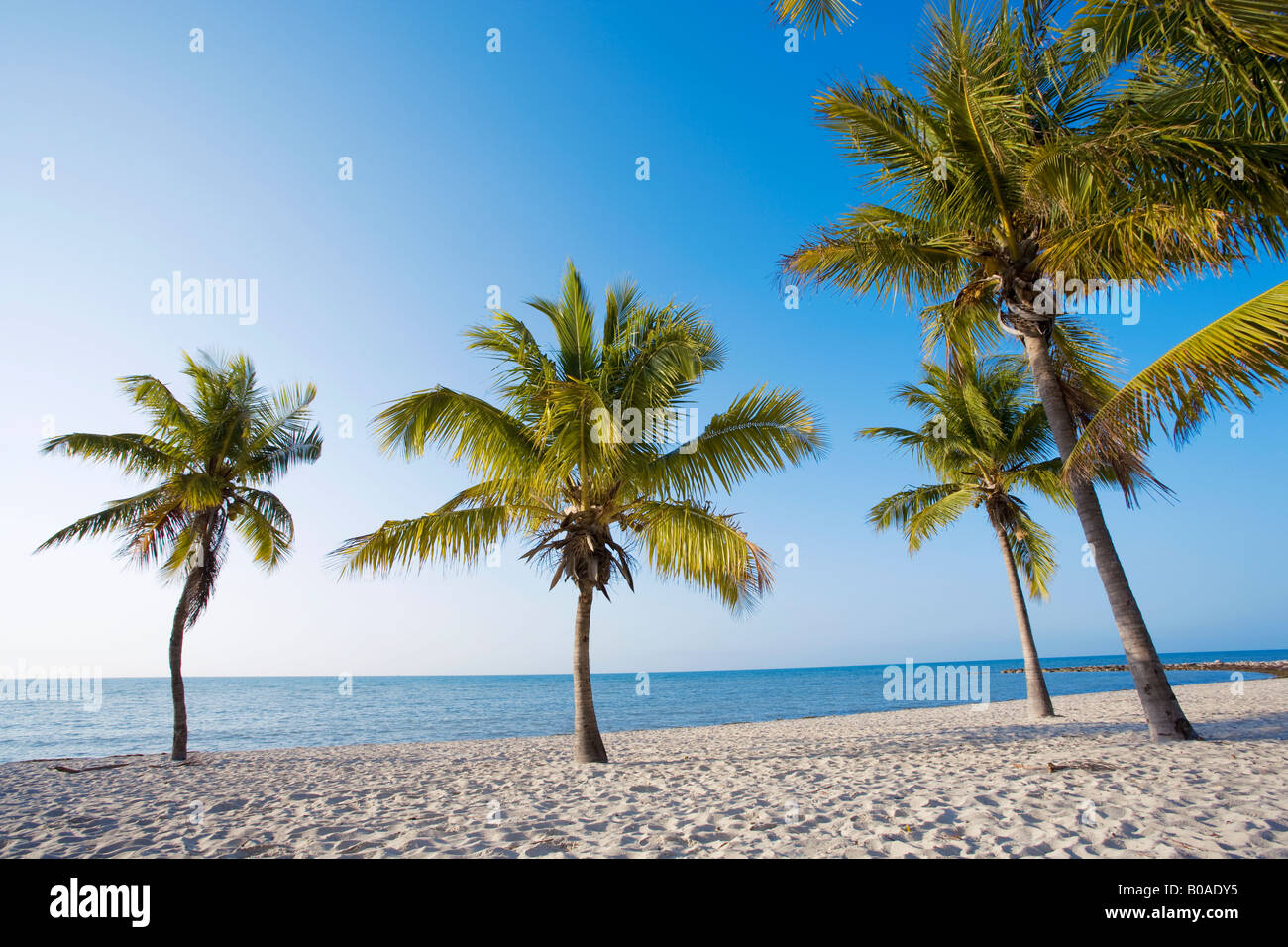 Palm trees on tropical beach in Key West, Florida, USA - Stock Image