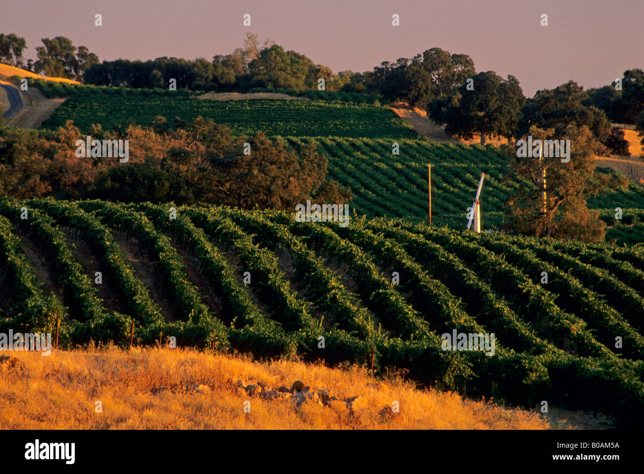 Amador County Stock Photos Amp Amador County Stock Images