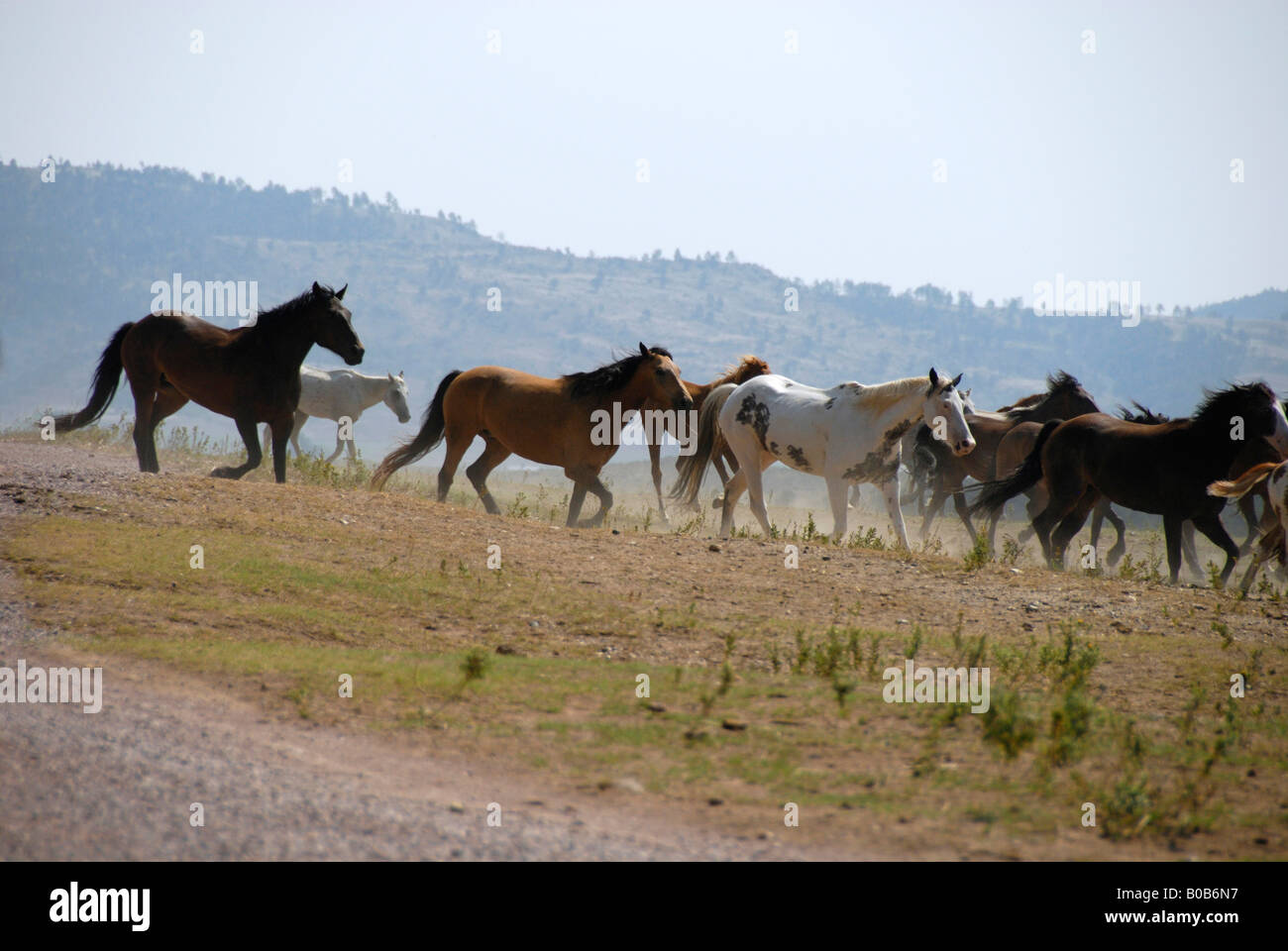 North America Usa South Dakota Black Hills Wild Horse Sanctuary Stock Photo Alamy