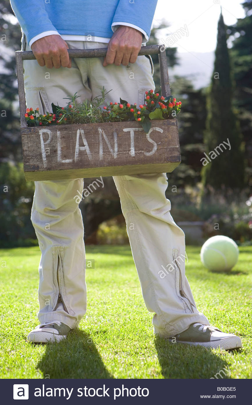 Man holding plant box, 'plants' written on box, football on grass in background, low section Stock Photo