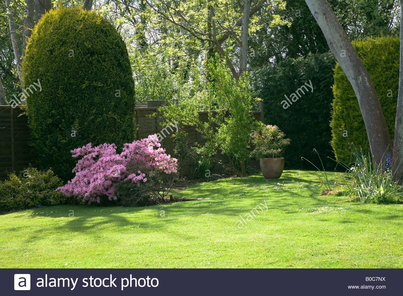 garden showing pink azalea bush and conifers - Stock Image