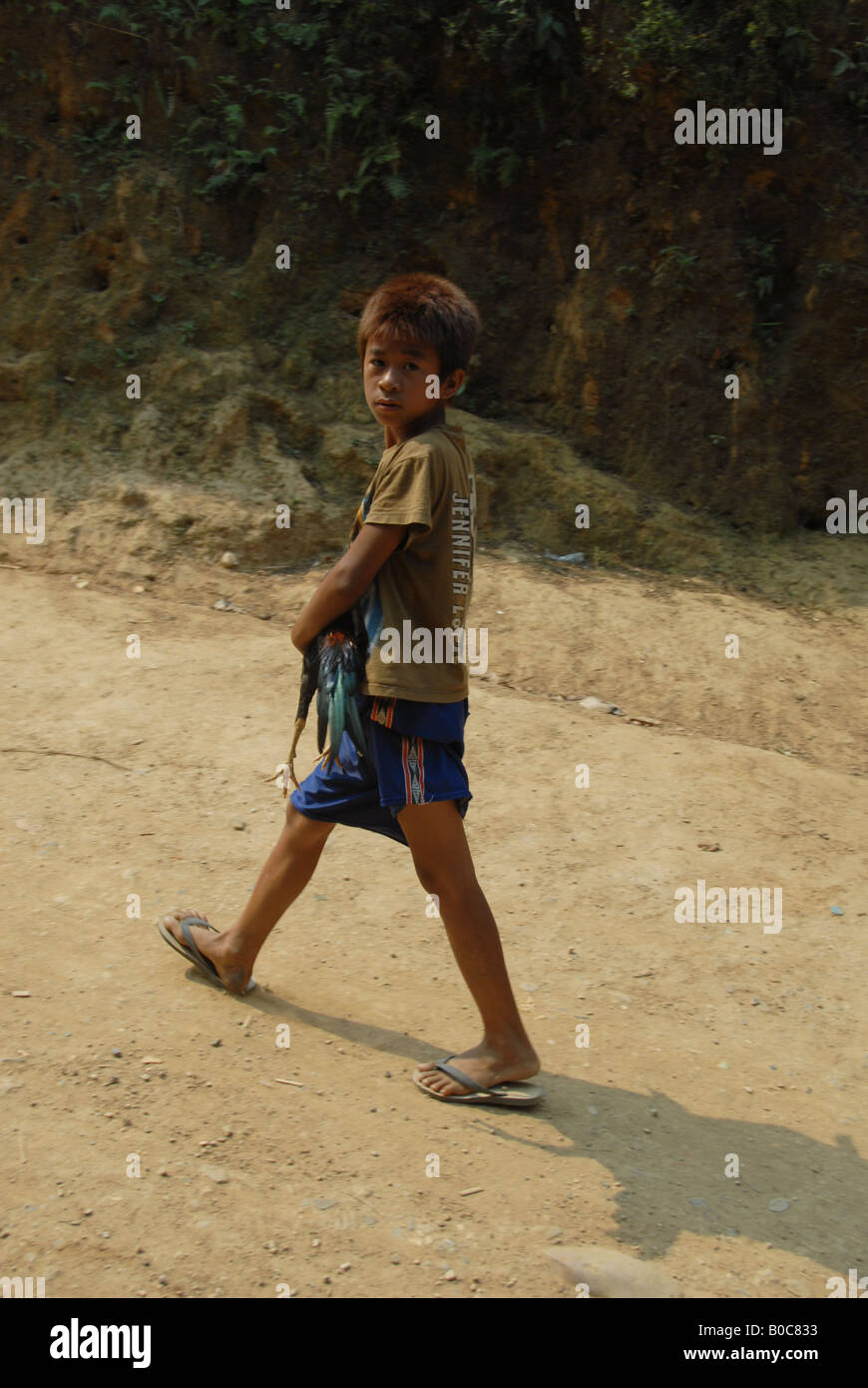 hilltribe boy is walking home with  his fighting chicken, karen long neck minority , mae hong song , thailand - Stock Image