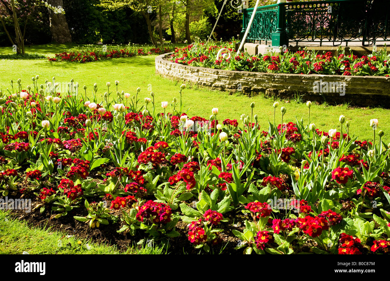 Colourful spring flower beds stock photos colourful spring flower spring flower beds of tulips and red primulas in front of the victorian bandstand at the mightylinksfo