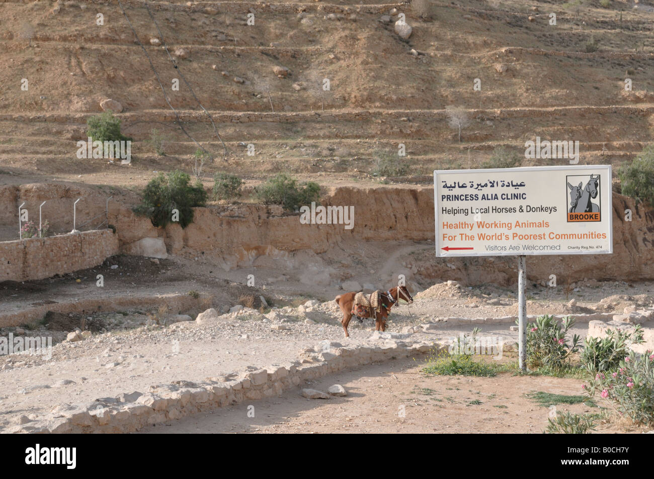 Middle East Jordan Petra Princess Alia Horse and Donkey Clinic - Stock Image