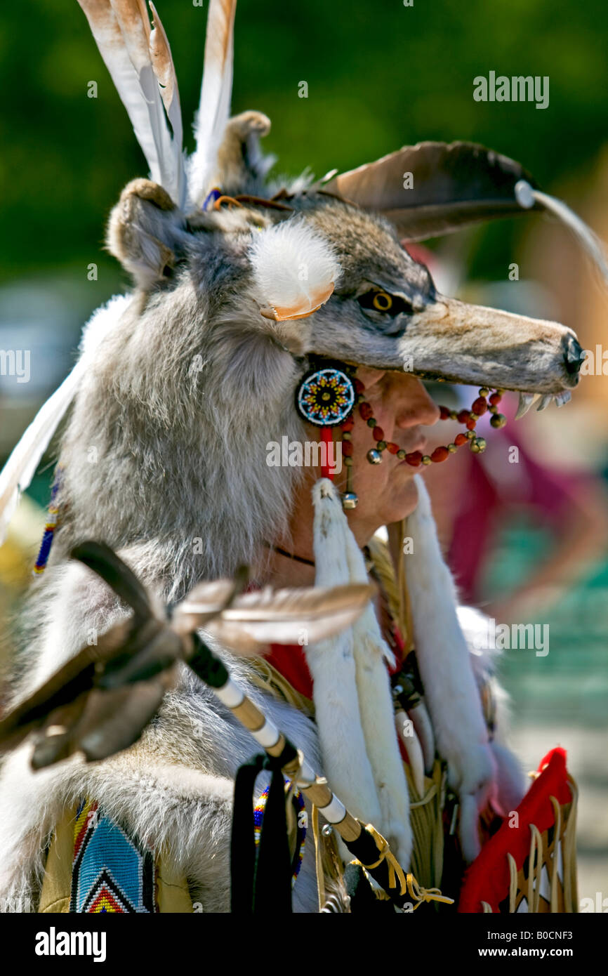 348a3e9fb3d Indian Wolf Stock Photos & Indian Wolf Stock Images - Alamy