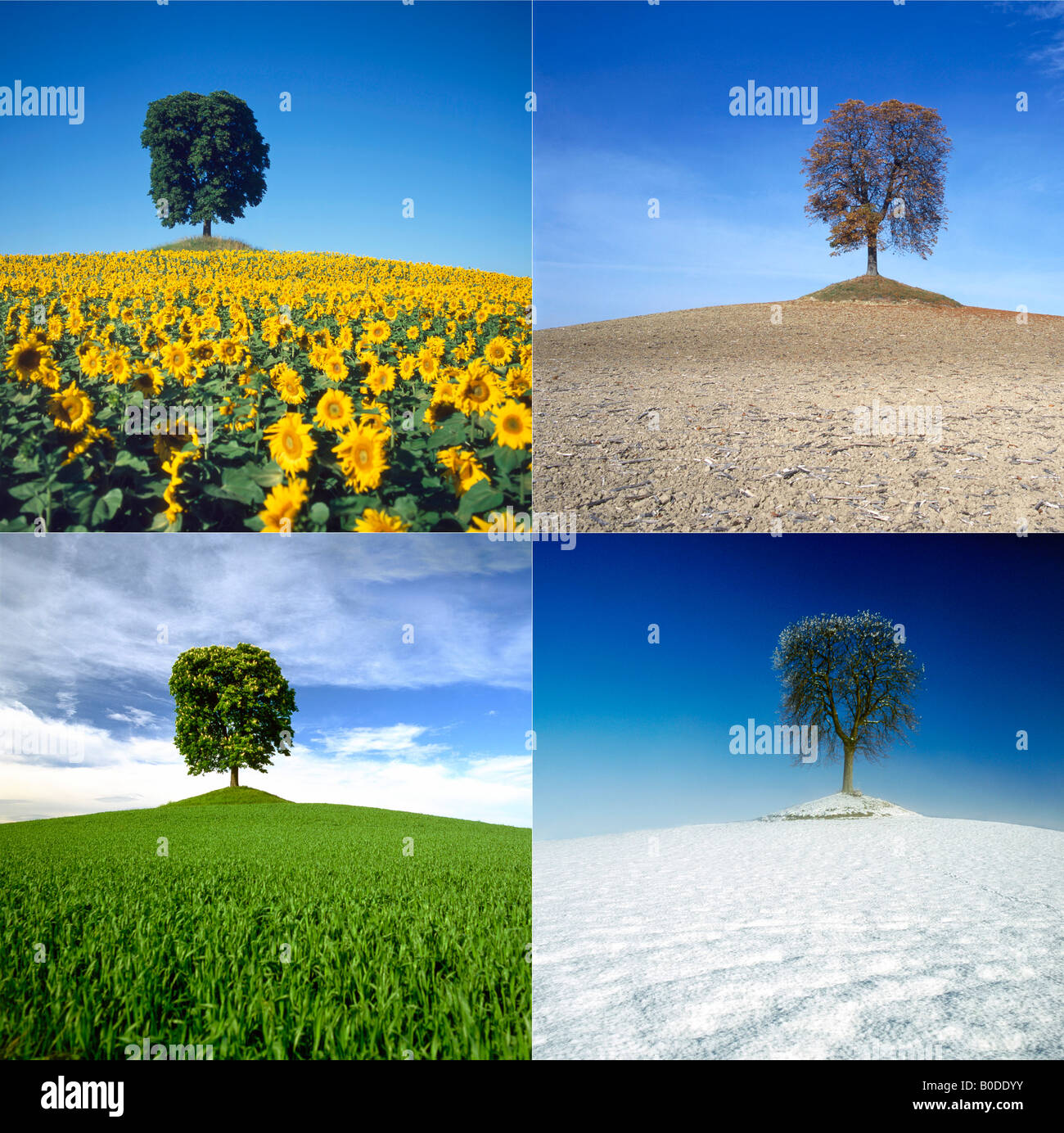 The four seasons - chestnut tree in a landscape in Spring, Summer, Autumn  and - 4 Seasons Stock Photos & 4 Seasons Stock Images - Alamy