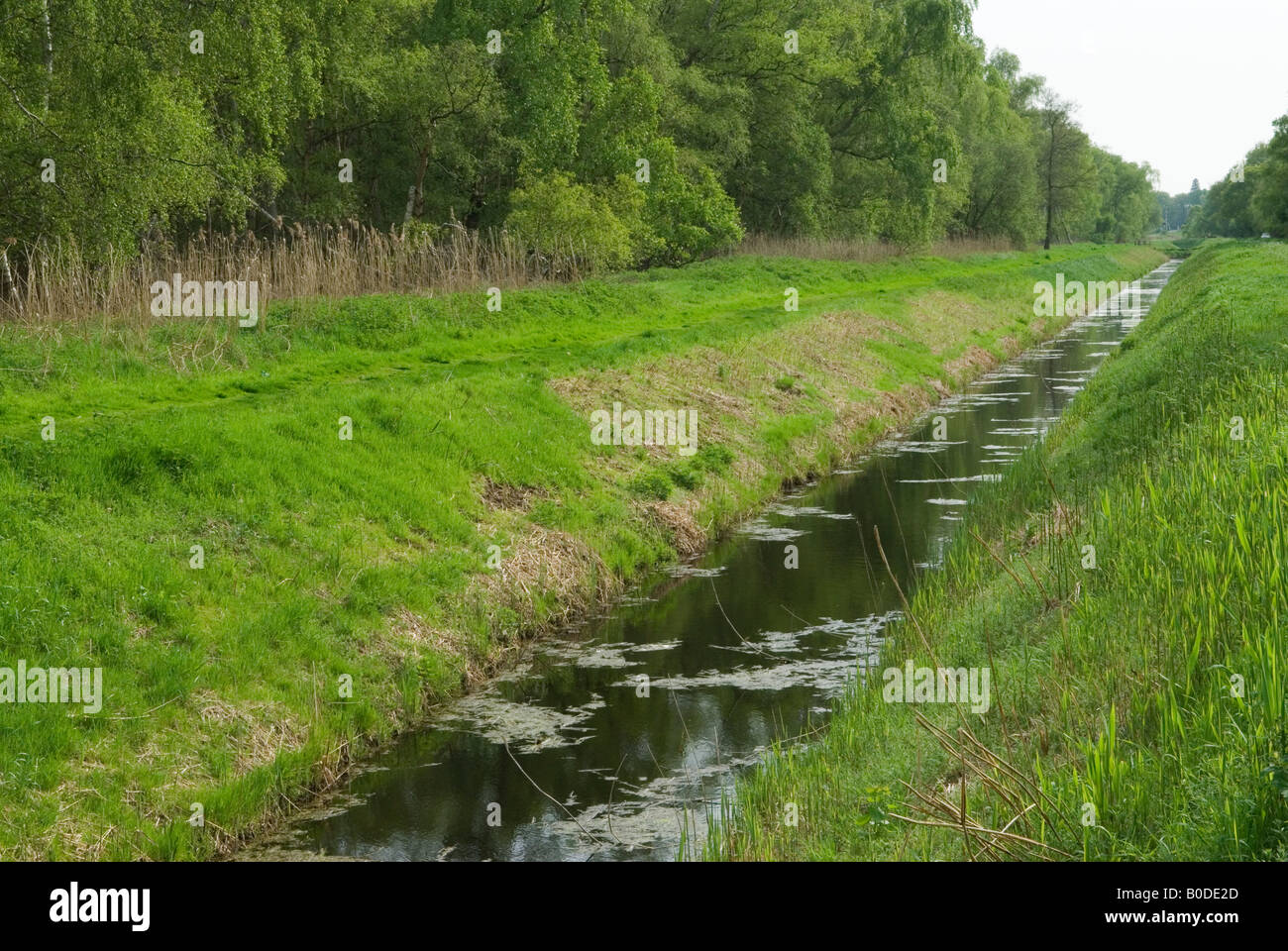 Holme Fen dyke drainage ditch Cambridgeshire Lowest point in Britain Nature Reserve to left and right of dyke HOMER Stock Photo