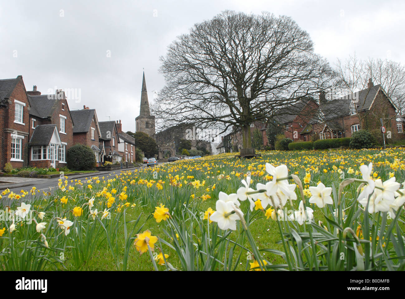 Cheshire village green of Astbury with the parish church of St Mary's,  near Congleton - Stock Image