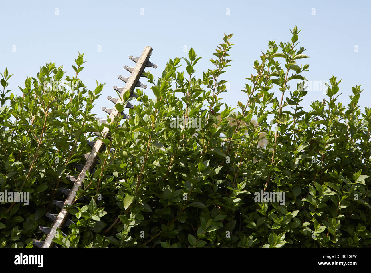 Hedge trimmer, close-up - Stock Image