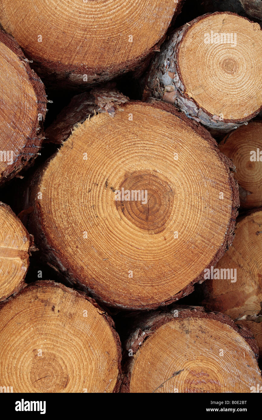 Ends of Sawn Logs - Stock Image