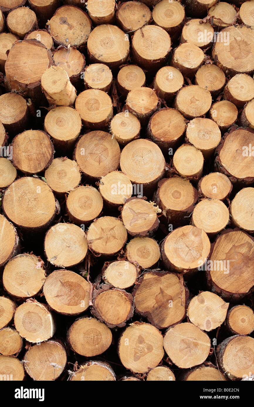 Pile of sawn logs - Stock Image