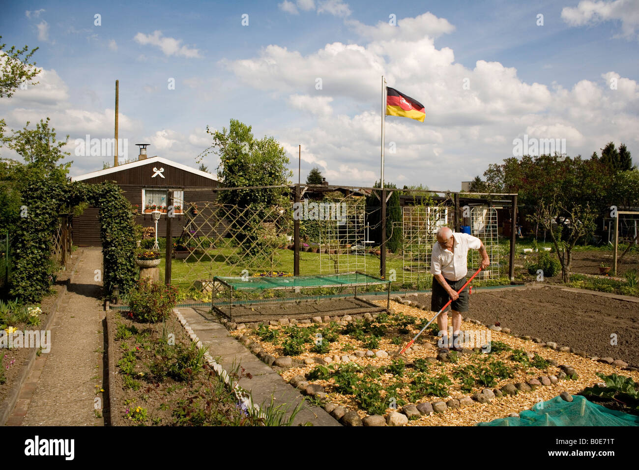 Man working in his allotment garden - Stock Image