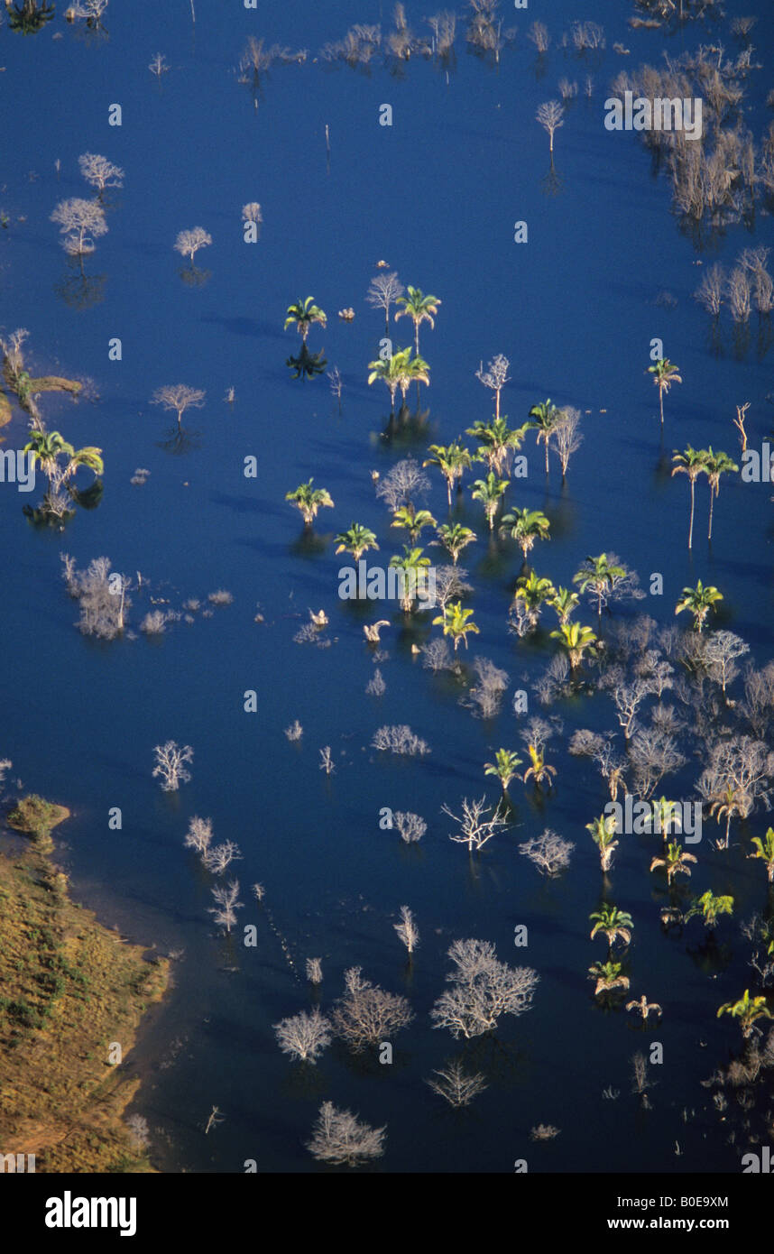 Cerado ecosystem with buriti palms flooded as part of a new hydroelectric dam at the headwaters of the Tocantins - Stock Image