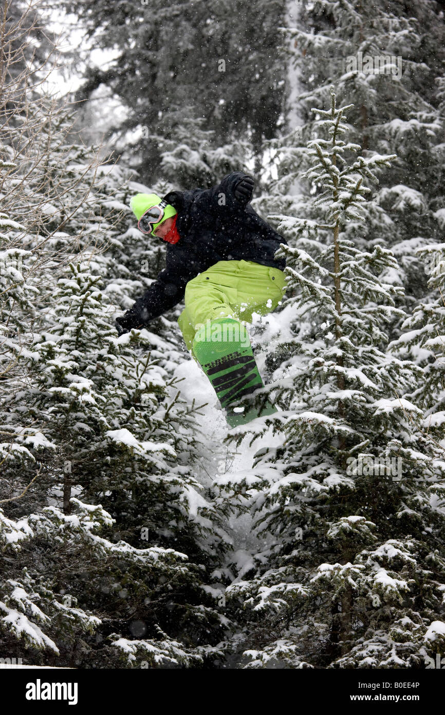 Snowboarder Zac Burke riding off piste jumps though pine trees in the Alps. - Stock Image
