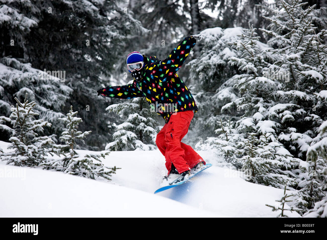 Snowboarder riding the trees in St Foy de Tarrentaise. - Stock Image