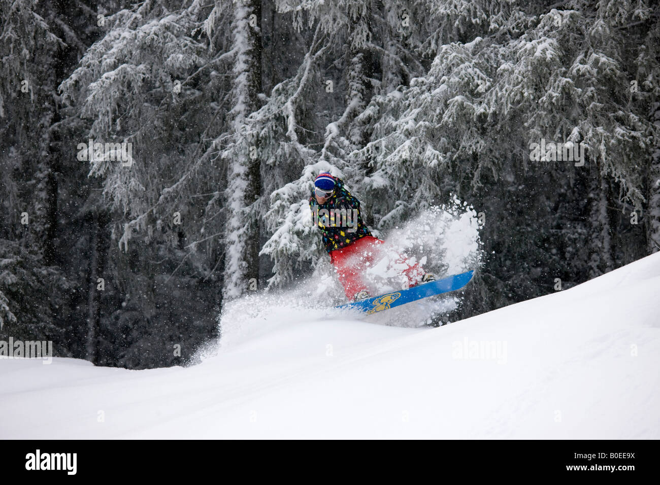 Jo Howard slashes the powder snow off piste in the trees - Stock Image
