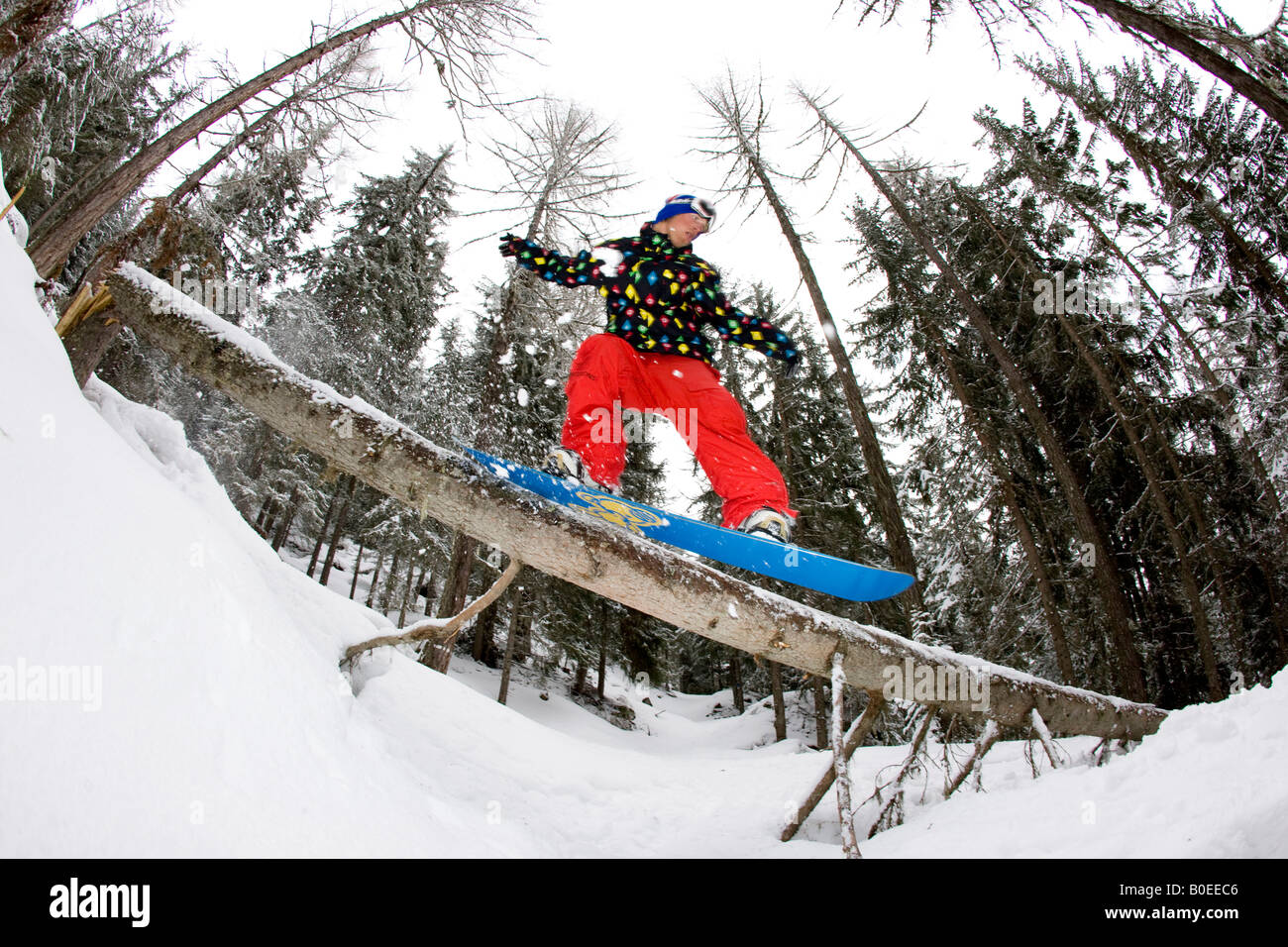Snowboarder slides a tree in the back country. - Stock Image