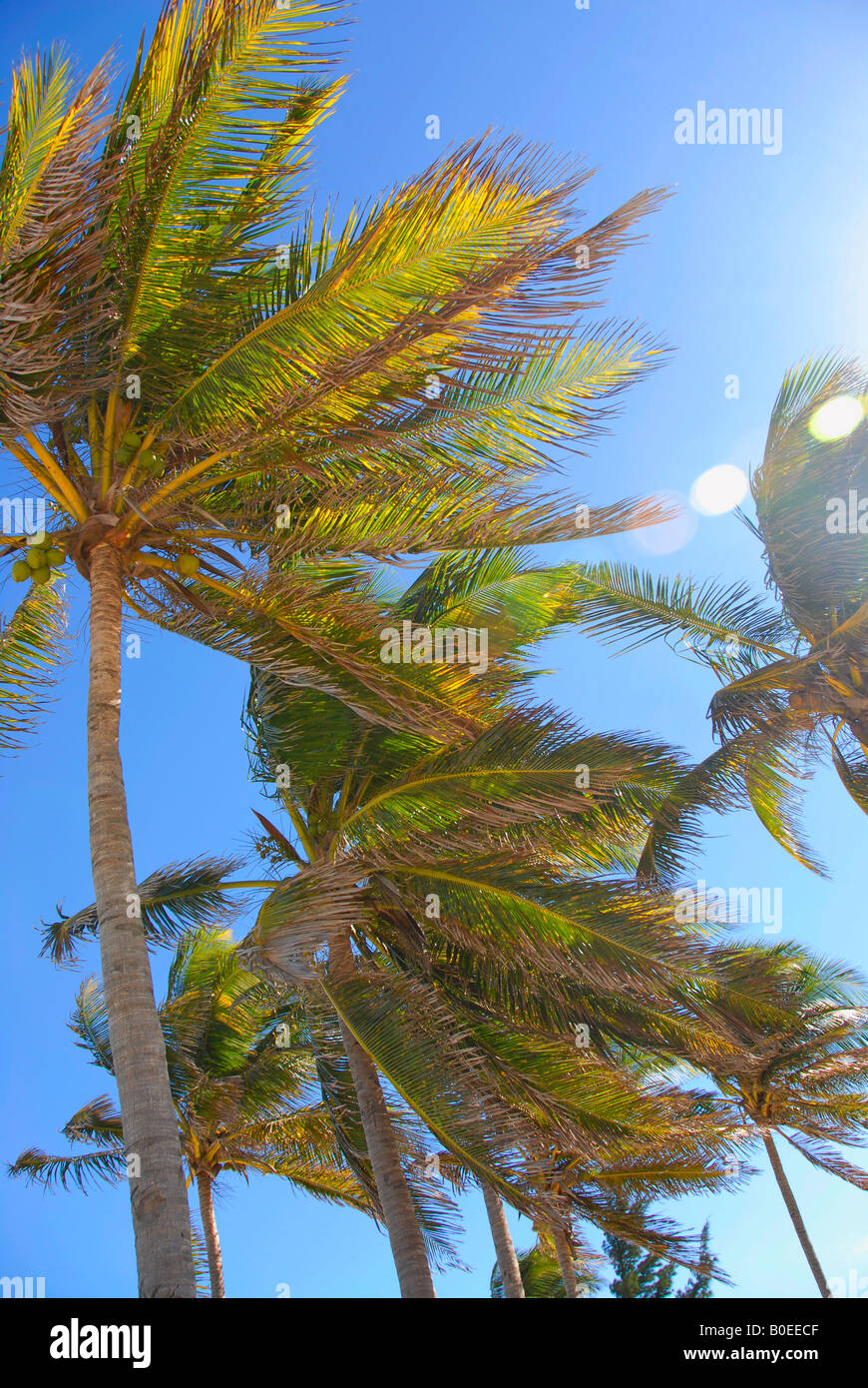 Palm trees in the sun - Stock Image