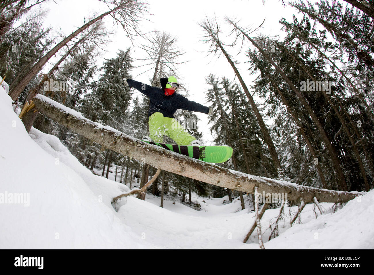Zac Burke slides a tree in the French Alps. - Stock Image