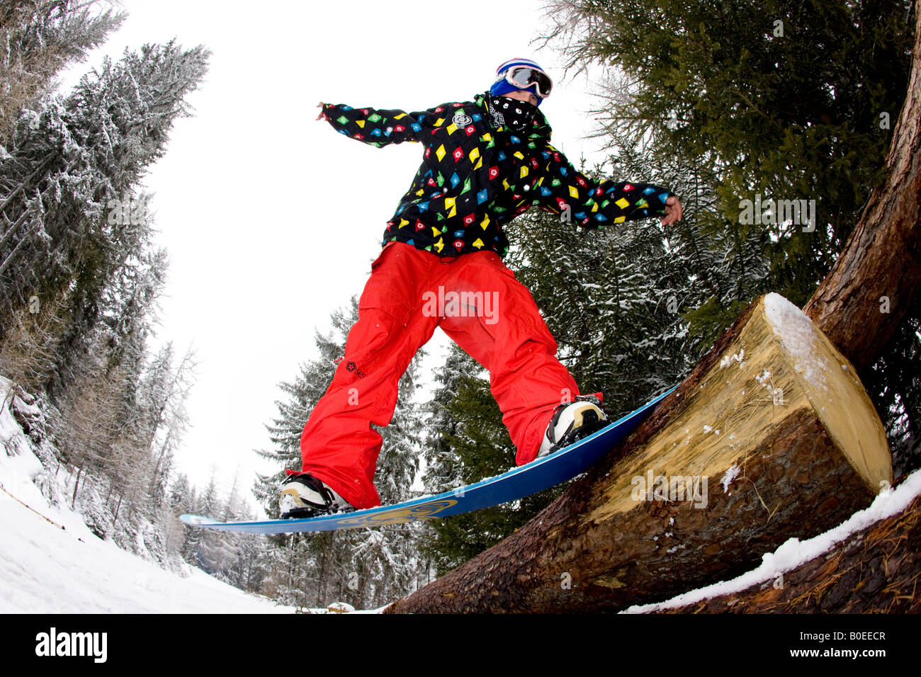 Snowboarder slides a tree, Alps - Stock Image