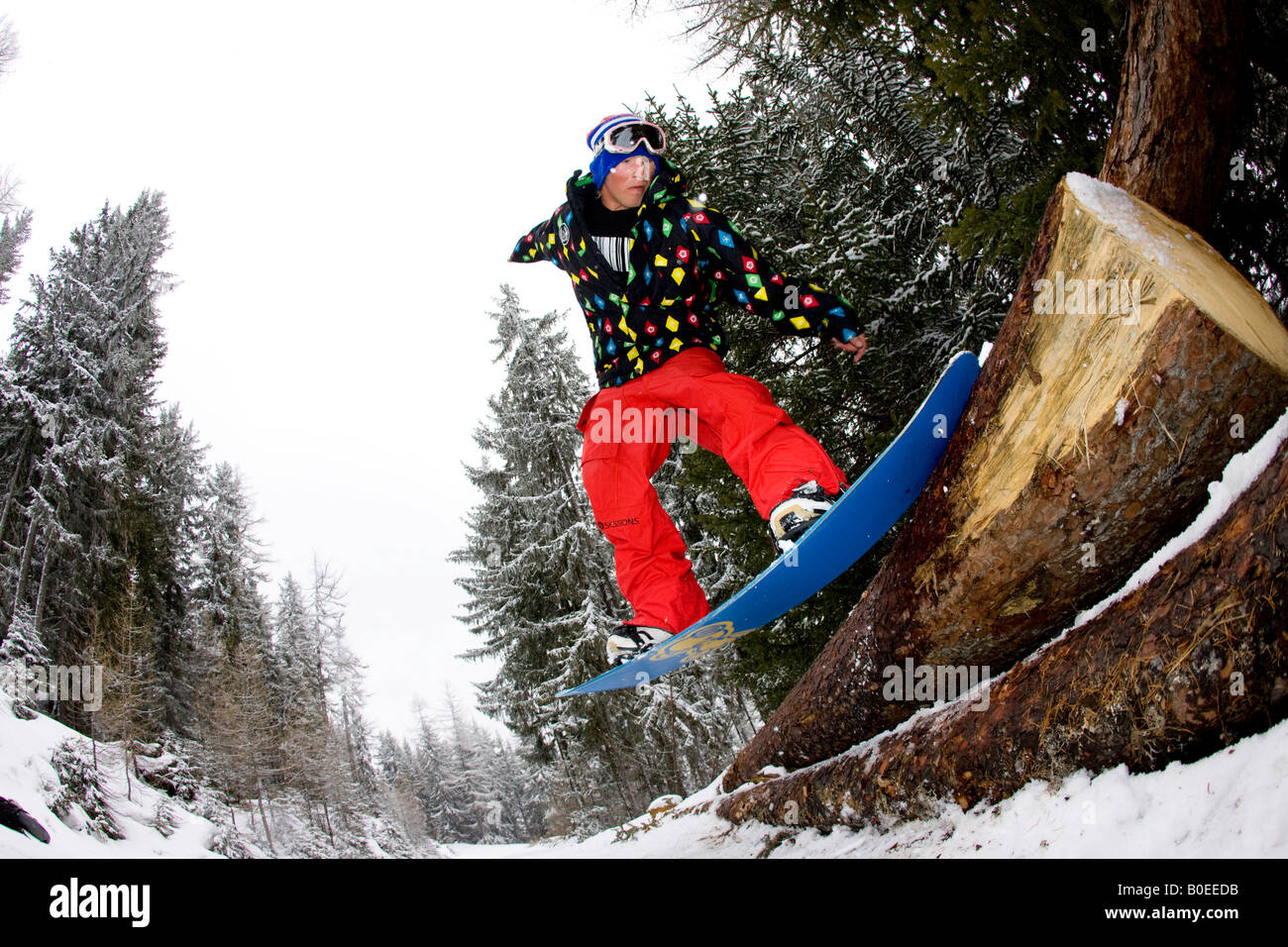 Snowboarder slides a tree in the French Alps - Stock Image
