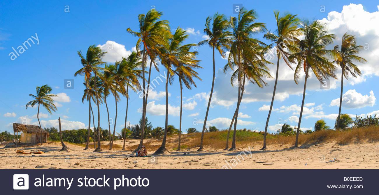 Palm trees on Playa del Este beach Havana Cuba - Stock Image